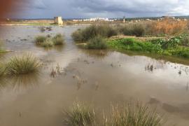La Conselleria de Agricultura emitirá un primer diagnóstico de los daños del temporal este martes