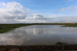 Los payeses dan por perdida la siembra de cereales tras las lluvias