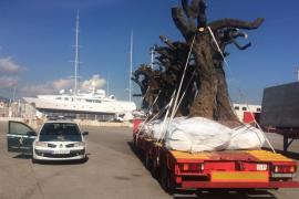La Guardia Civil inmoviliza posibles hospedantes de 'Xylella fastidiosa' en el Port de Palma