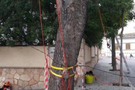 Cort incrementa las inspecciones de árboles para evitar caídas a causa del temporal