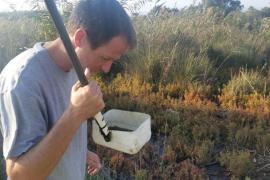 Cort adelanta un mes el control de plagas en el Pla de Sant Jordi por las lluvias