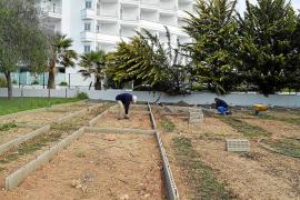 Huertos urbanos para cultivar la inserción sociolaboral en Sant Llorenç