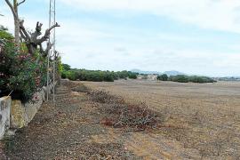 Frenazo a los proyectos de parques fotovoltaicos de Manacor y Llucmajor