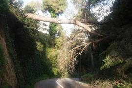 Los últimos coletazos del temporal de viento