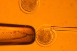 Da a luz a un niño gestado en un embrión congelado hace 16 años