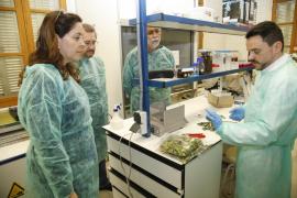 Los biólogos apoyan la política del Govern con la 'Xylella fastidiosa'