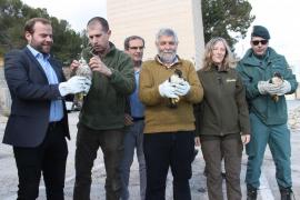 COFIB libera a tres halcones heridos por impacto de bala en na Burguesa