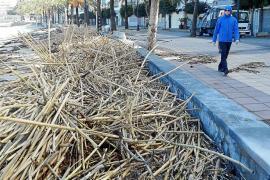 Quejas de los hoteleros de Sóller por el retraso municipal en limpiar las playas y el paseo