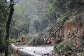 El Consell pedirá 2,2 millones de euros al Gobierno para paliar los daños del temporal