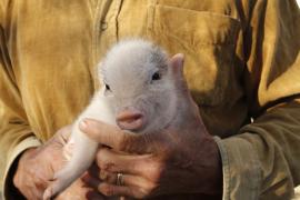 El Congreso, a favor de que los animales de compañía dejen de considerarse «cosas»