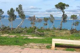 Podan el bosque de la zona pública de costas en Llucmajor para tener 'vistas al mar'