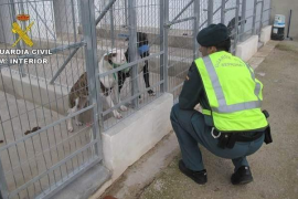 Un hombre de 66 años muere en Alicante por las dentelladas de 5 perros