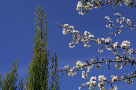 La primavera se adelanta esta semana en toda España