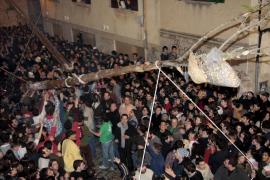 El Pi de Sant Antoni de Pollença 2018 no tendrá un gallo como premio en su corona