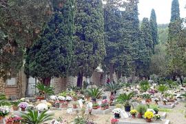 El Ajuntament de Sóller talará algunos de los cipreses del cementerio
