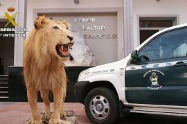 La Guardia Civil detiene a 59 personas en una operación contra el tráfico de especies