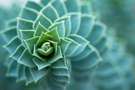 Matemáticas en la naturaleza
