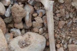 Un grupo de niños encuentra centenares de huesos humanos en un descampado de Palma