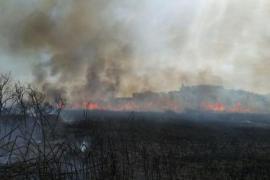 Un incendio arrasa el 80% de ses Feixes des Prat de Vila en Ibiza