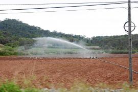El Govern aumentará el caudal de agua para uso agrario si el nuevo cupo es insuficiente