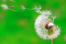 Los expertos auguran una dura primavera para los alérgicos de Balears