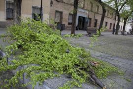 El colegio de la alumna fallecida al caerle una rama luce un crespón negro