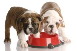 Cuatro de cada diez familias españolas tiene una mascota en sus casas