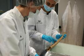 Las identificaciones de los restos de la fosa de Porreres podrían conocerse en otoño