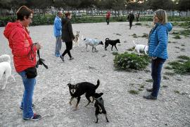 Los vecinos de Palma denuncian el abandono de las zonas de 'ocio' para perros