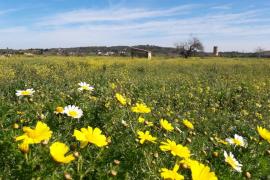 La Aemet espera una primavera cálida y normal en cuanto a precipitaciones
