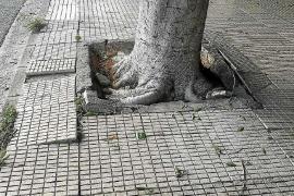 Aumenta un 50% el gasto en resposabilidad patrimonial en el Ajuntament de Palma