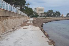 APB encargará a la UIB un estudio sobre la posidonia en aguas portuarias