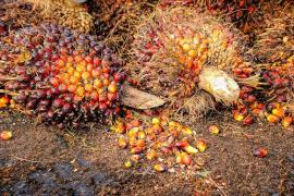 El debate sobre el aceite de palma llega al Congreso