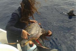 Liberadas dos tortugas marinas en Sa Dragonera