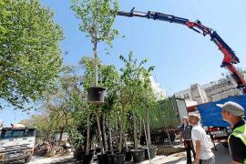 Comienzan a plantar los nuevos árboles y plantas en Vara de Rey y su entorno