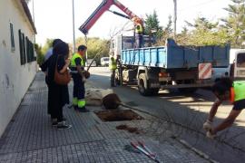 El Ayuntamiento de Palma planta más de 1.000 árboles en su campaña de reposición