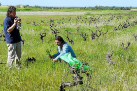 Felanitx quiere implantar los estudios de Enología para recuperar su pasado vinícola
