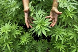 Detectan una nueva droga 80 veces más potente que el cannabis