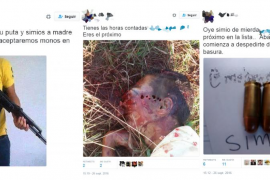 Detenidos cuatro tuiteros por 'subastar' la «caza» del presidente de una asociación contra el racismo