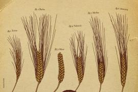 Porreres celebra la XI Diada d'Agricultura Ecològica
