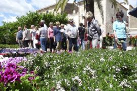Las flores protagonizan la Fira de Costitx 2017