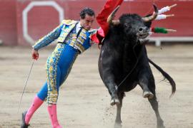 El Gobierno destinó un millón de euros para mejorar la raza del toro de lidia