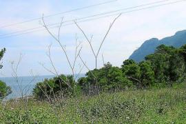 Medi Ambient exige nuevos informes a los propietarios de Pinares de Bonaire