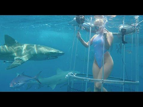 Un tiburón ataca a la actriz porno Molly Cavalli mientras grababa un anuncio