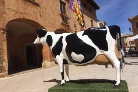 Las ganaderías menorquinas salvan el concurso de vacas frisonas