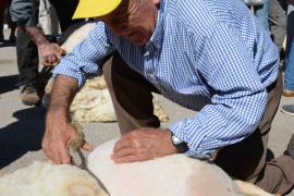 La Festa des Tondre de es Llombards pone en valor el tradicional arte de esquilar