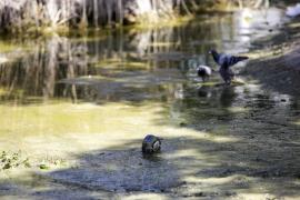Suciedad en el lago del Parque de la Paz en Vila (Fotos: Daniel Espinosa).