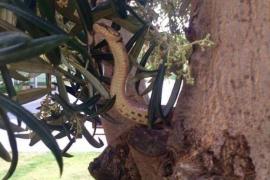 Aparece una serpiente de medio metro en el Parc de ses Estacions