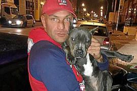 Juicio por robar un cachorro de pitbull en una vivienda de Marratxí