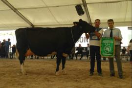 Gran preocupación por el futuro del sector lácteo en el concurso de vacas de Campos